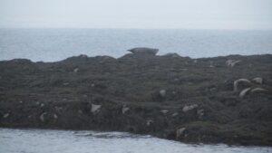 Cottage Cove Seals