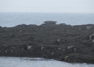Cottage Cove Seals
