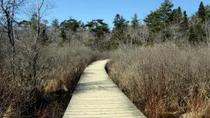 Frog Pond Trail