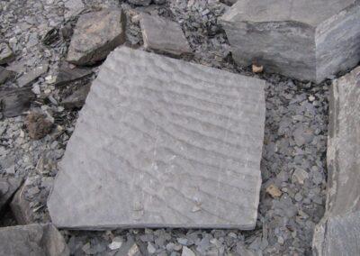 Blue Beach Fossil